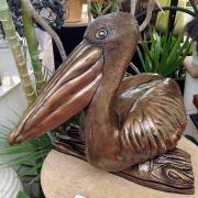 Amy's pelican